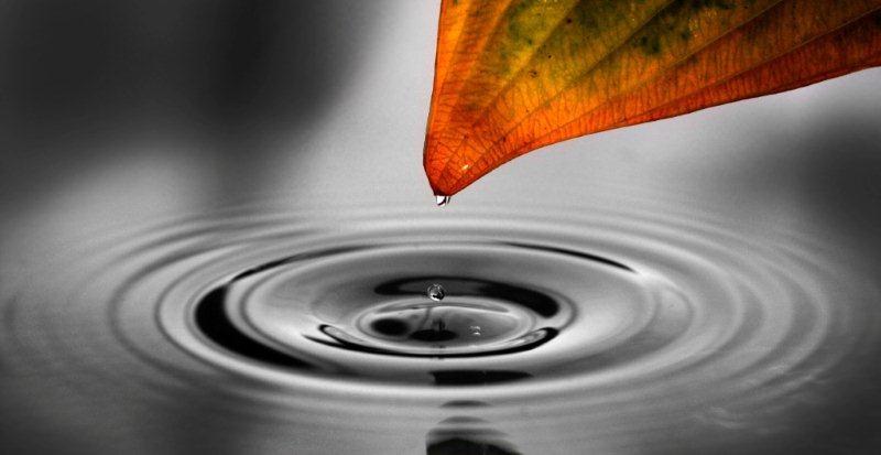 Bognár Róbert::Egy csepp víz