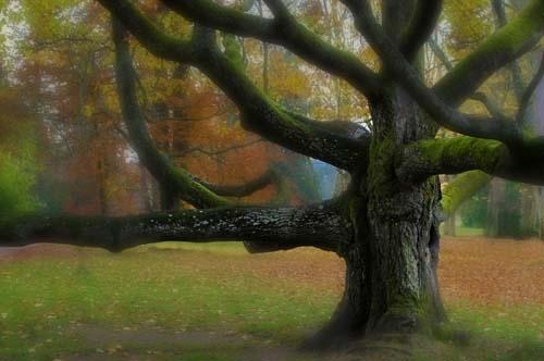 A vén göcsörtös fa álma