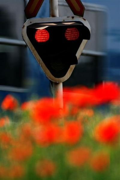 Piros pipacs az tilos