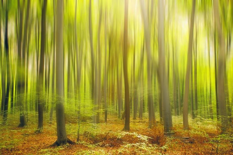 Álomerdő