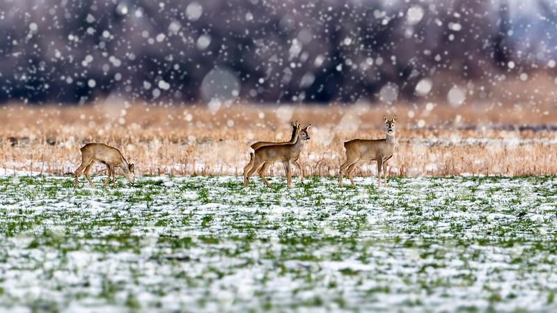 Télen a mezőn