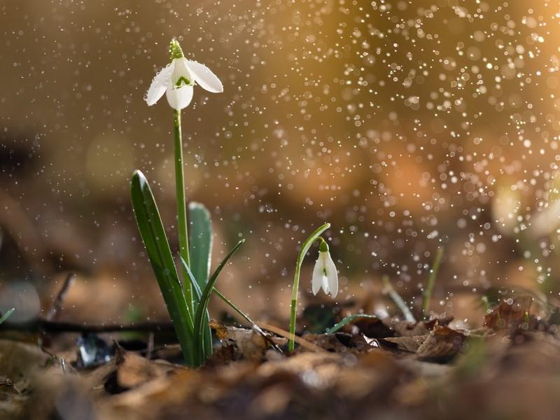 Tüsszentő tavasz