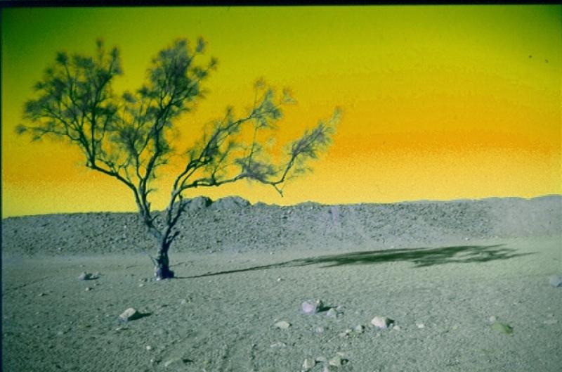 Lantos Sándor::Sivatag
