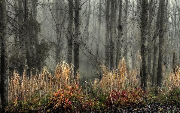 Ködben 1