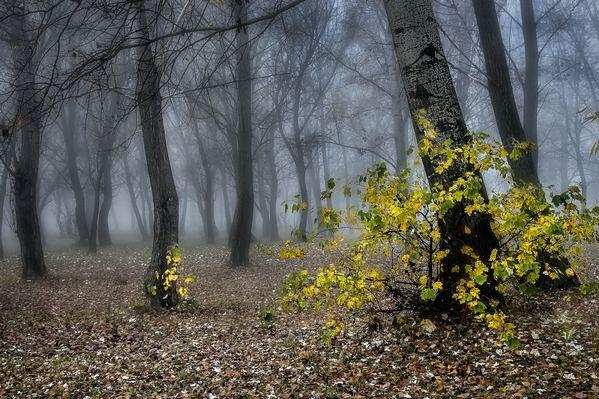 Ködben 3