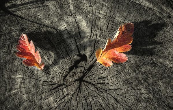 Őszi levelek 1