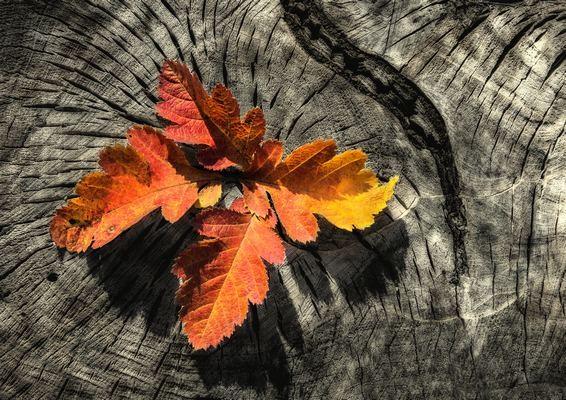 Őszi levelek 2