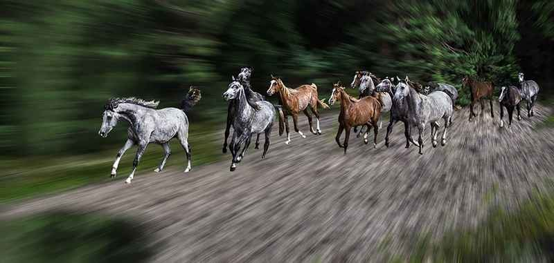 Stipsits Ibolya::Gallop