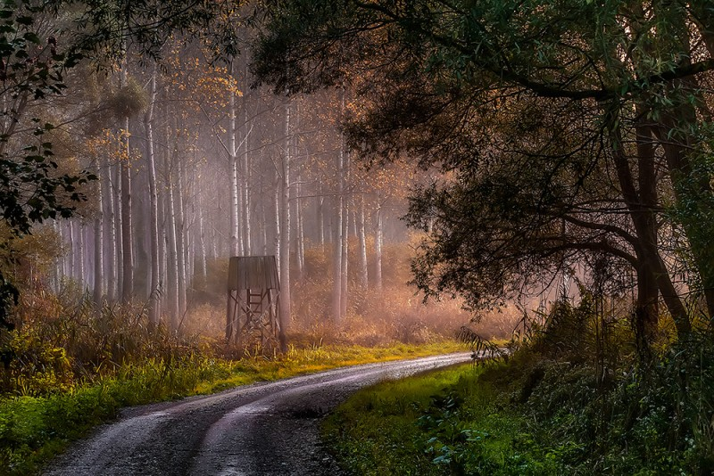 Tálos Péter::Mesél az erdő