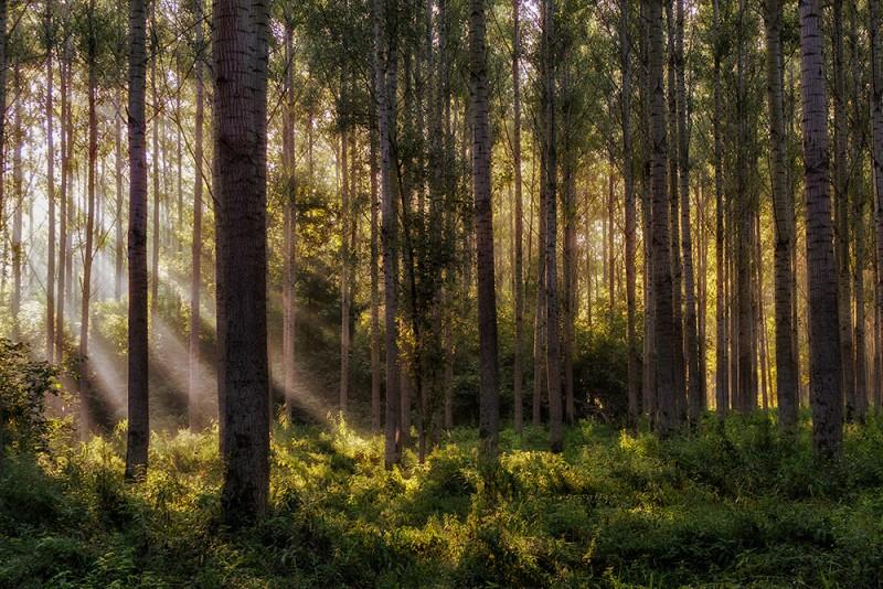 Tálos Péter::Álomerdő