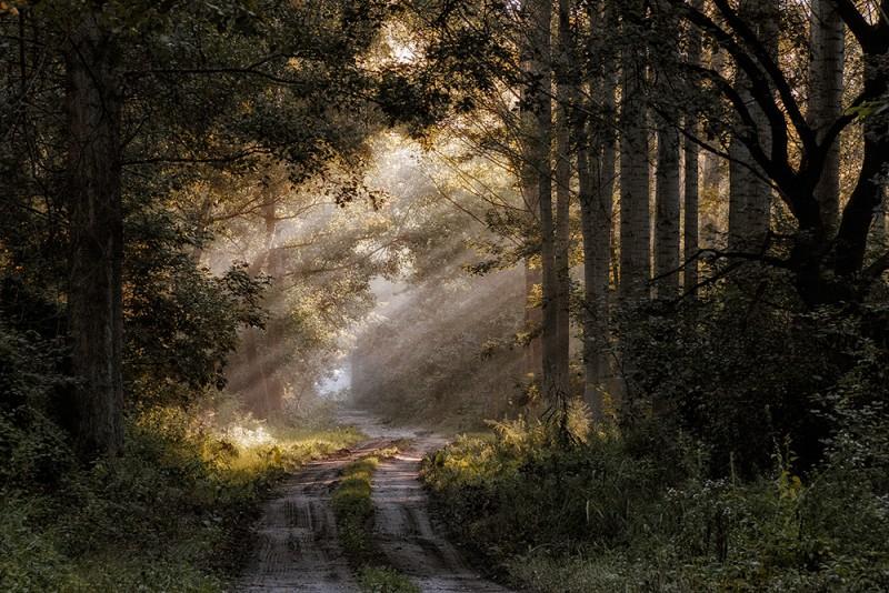 Tálos Péter::Ősz az erdőn