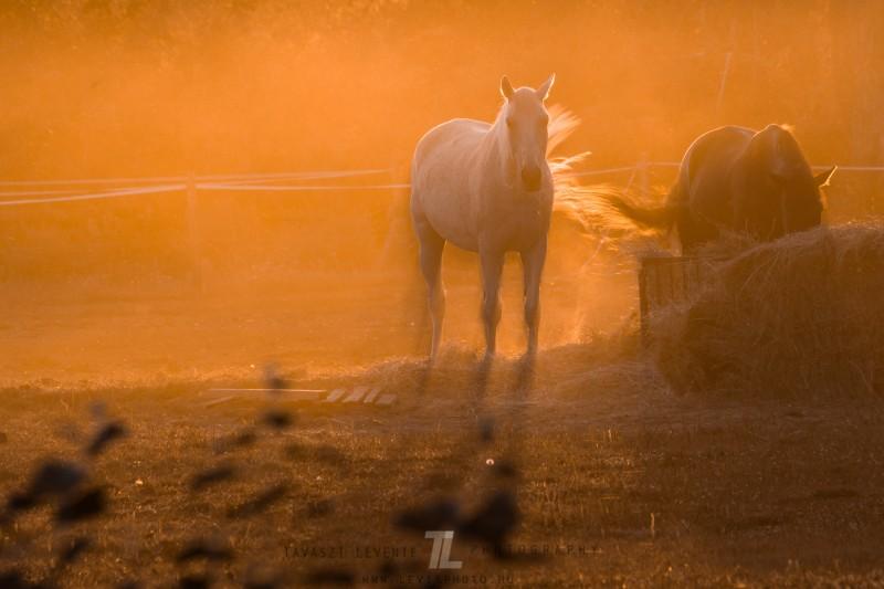 Tavaszi Levente::Aranyló napsugár