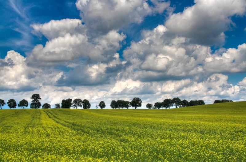 Tavaszi Levente::Repceföld