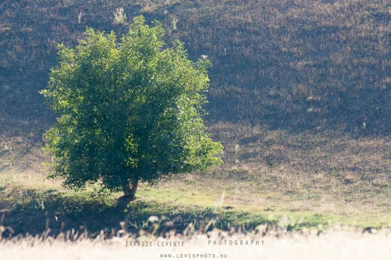 Tavaszi Levente::Egyedül